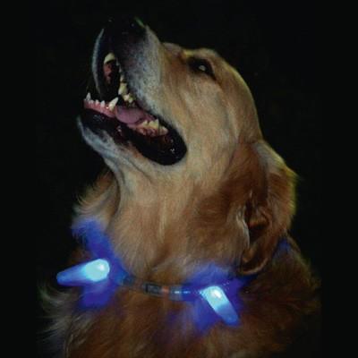 Leucht-Zapfen für Leuchthalsbänder