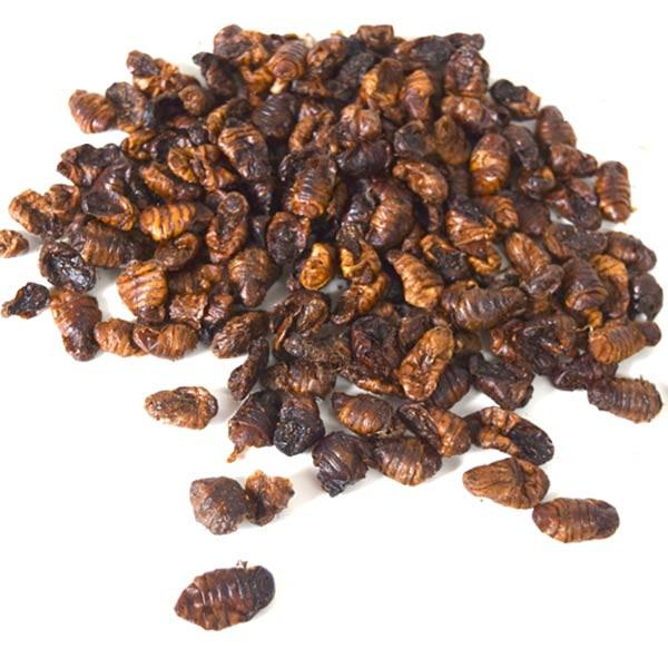 Seidenspinnerpuppen als gesunde Hunde-Leckerlie mit Insektenprotein