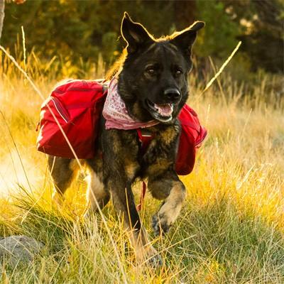 Hunderucksack Palisades Pack von Ruff Wear - das Spitzenmodell
