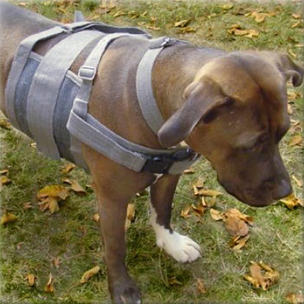 Praktische Hunde-Gehhilfe von Beppo aus Cotton Recyclingfaser