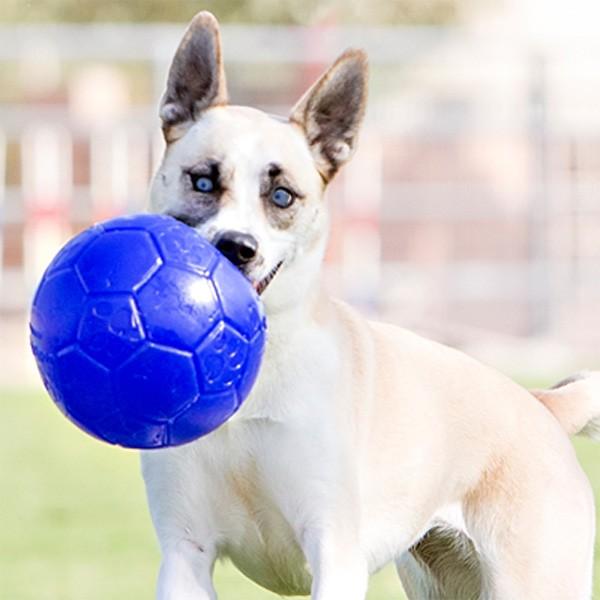 Robuster Soccer Ball für Fussballer-Hunde von Jolly Pets