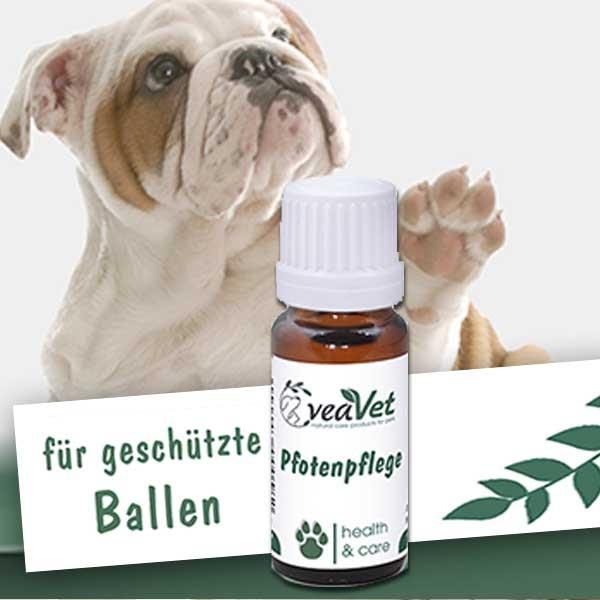 Natürliche Pfotenpflege für Hunde - von cdVet