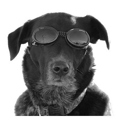 Hunde-Sonnenbrille von Doggles mit Wechselgläsern